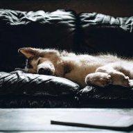 WolfAngus
